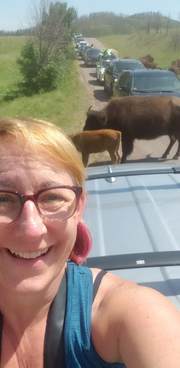 custer buffalo safari