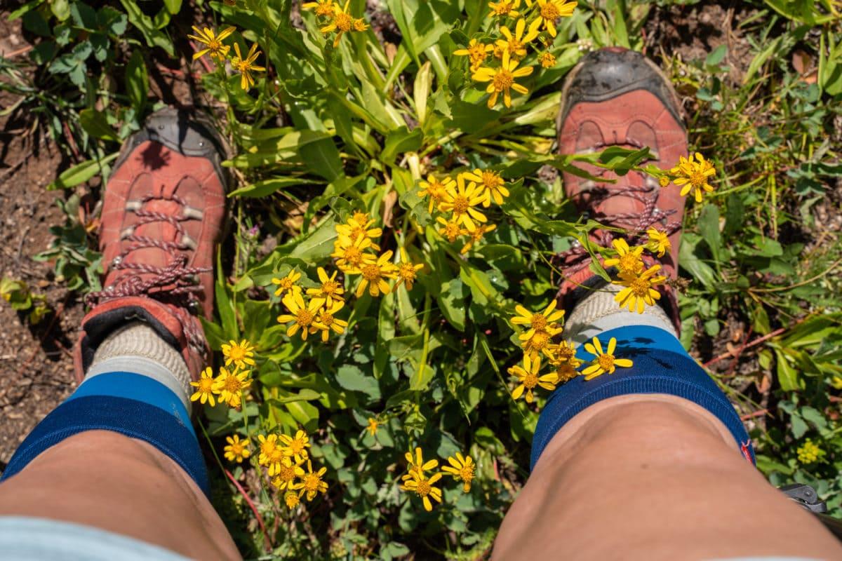hiking in vail wildflowers