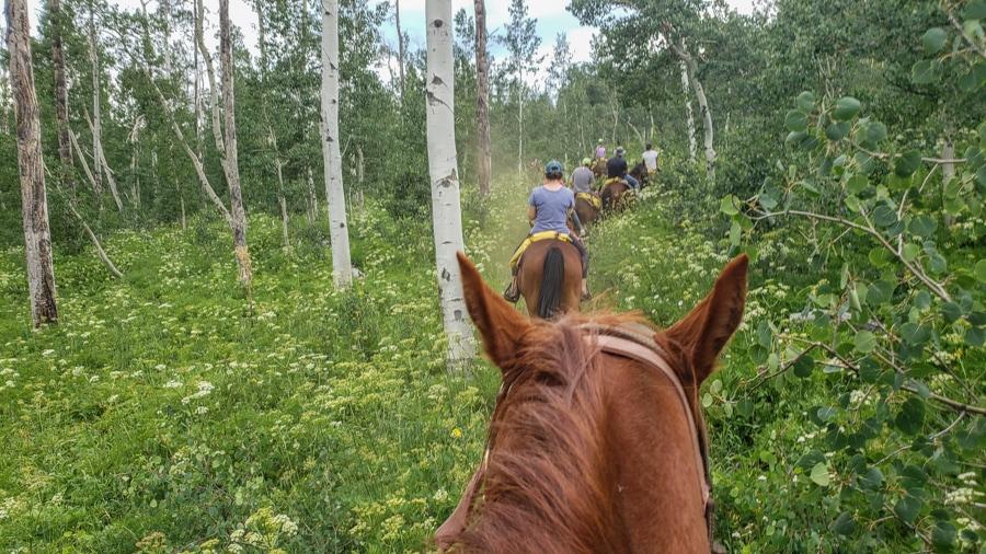 horse ride through aspens