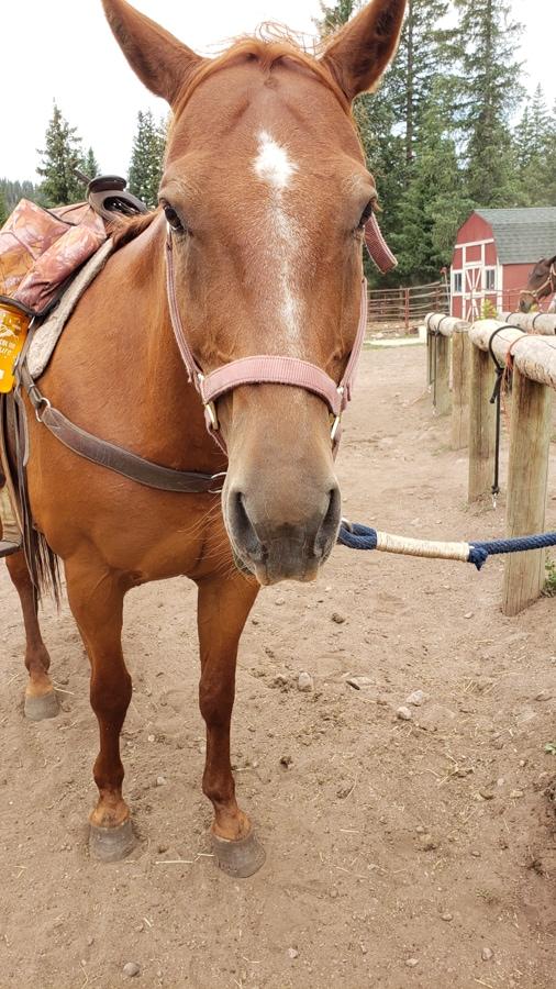 bud the horse