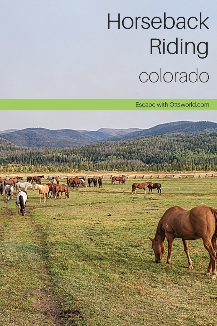 horses at pasture colorado
