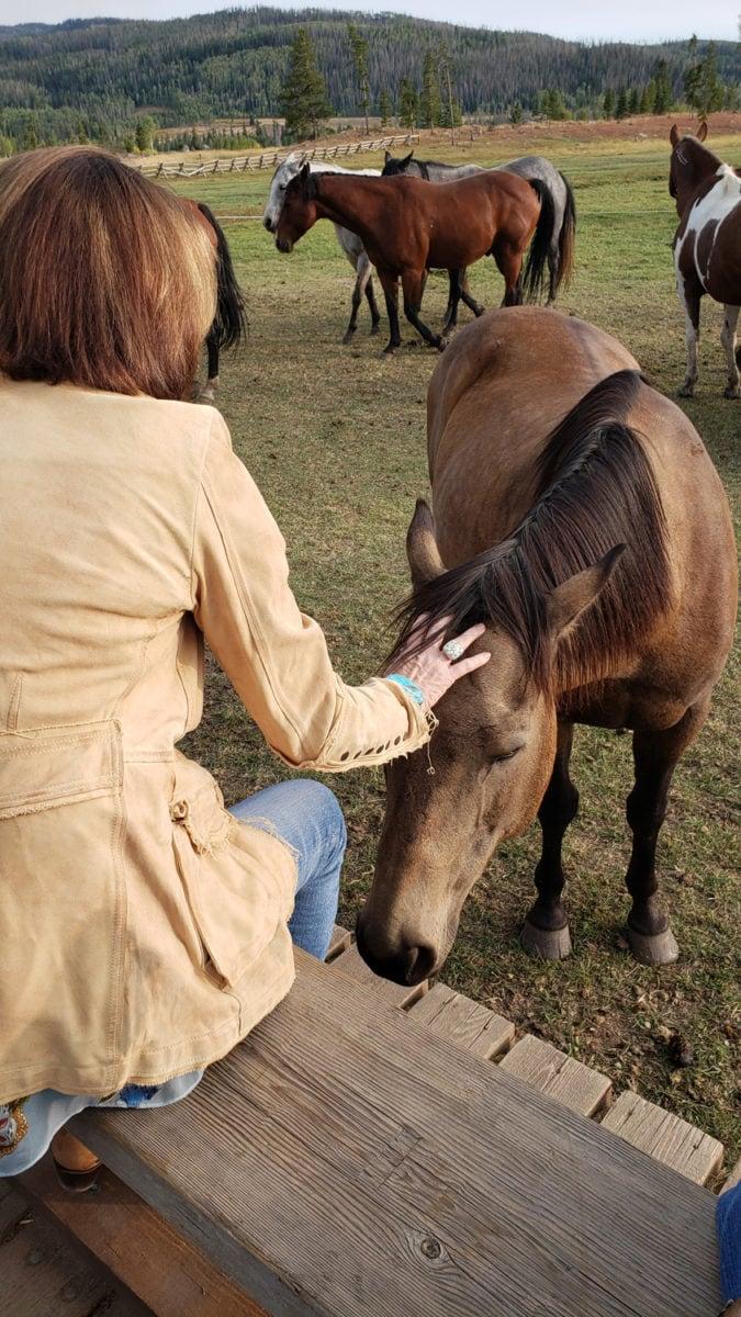 Meeting horses at the ranch