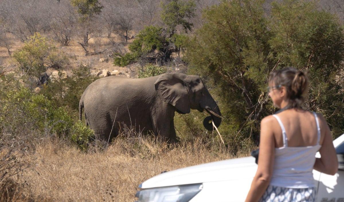 Elephants south africa bush camp