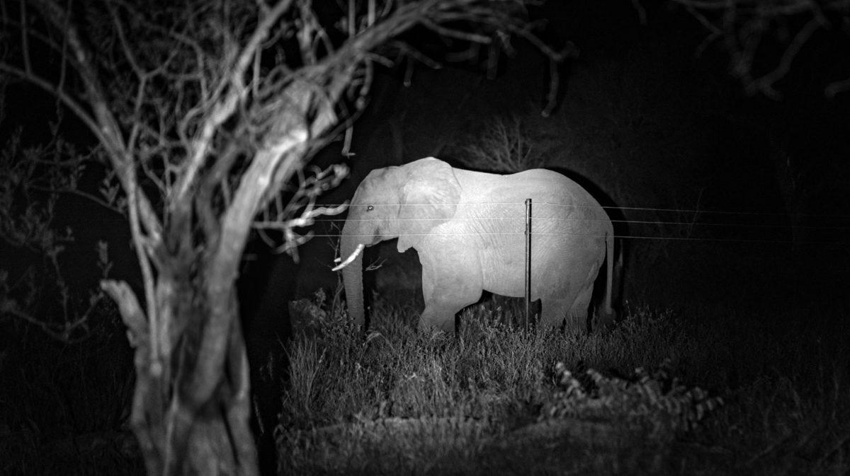 south africa elephant