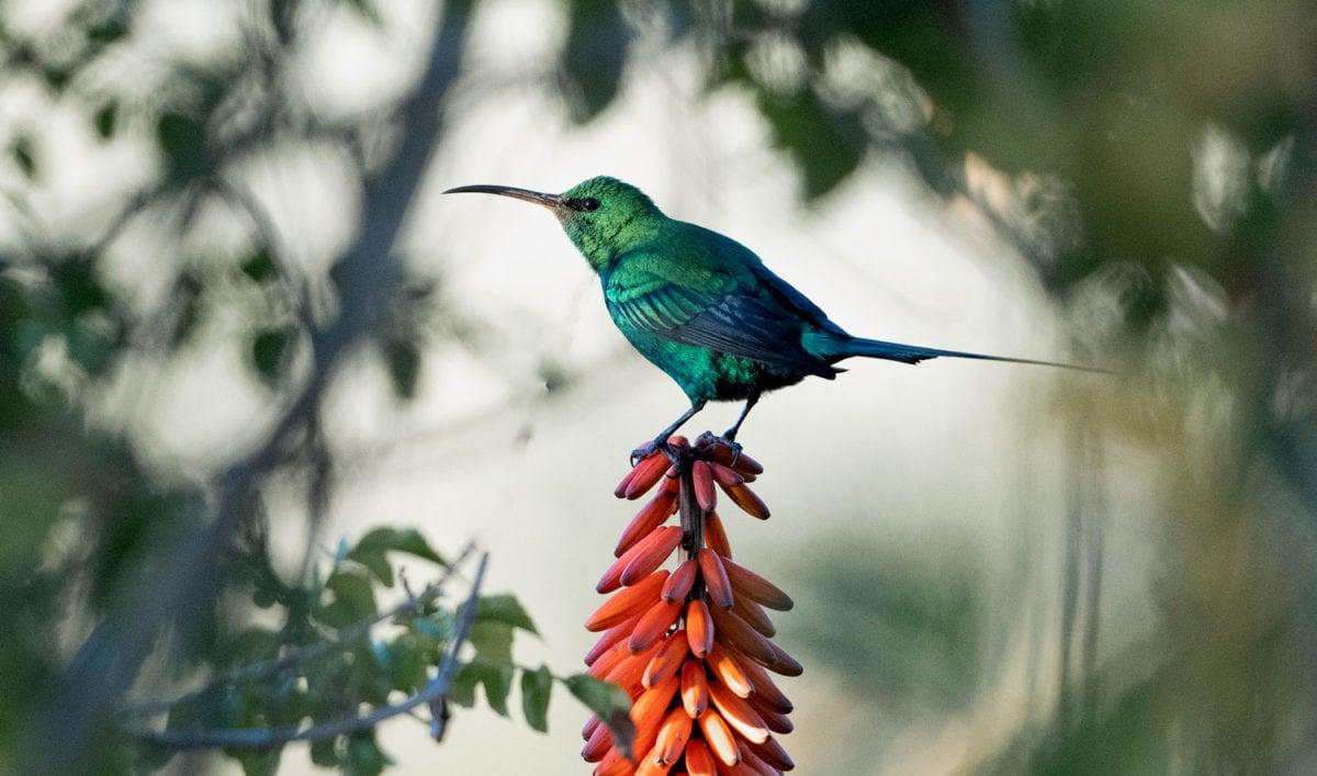 south africa birdwatching