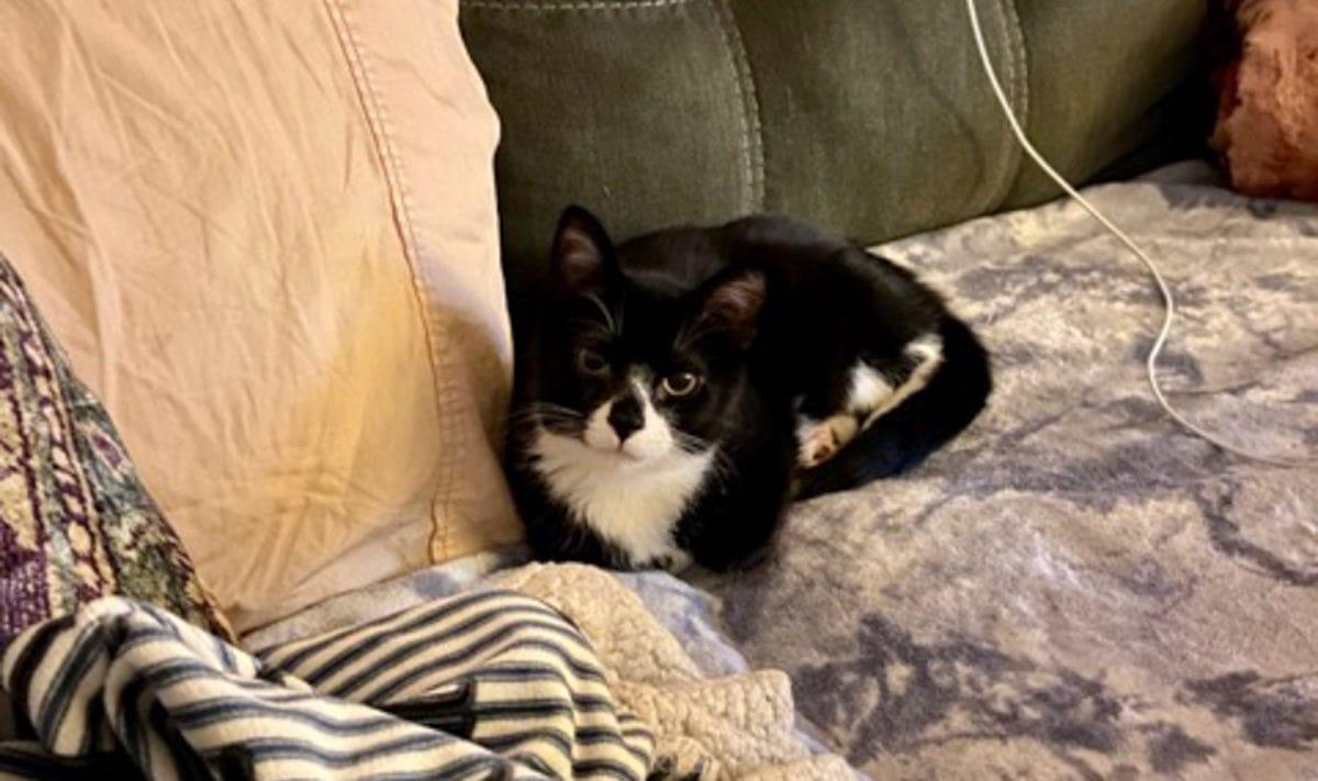 kitten grown up