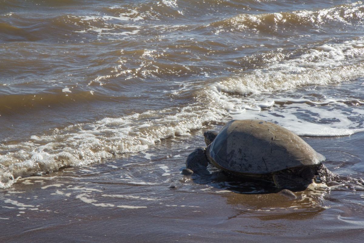 turtle watching lanai