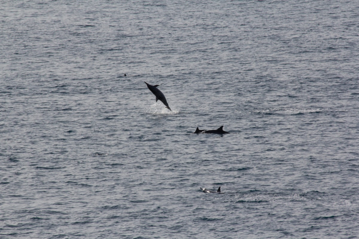 things to do in lanai spinner dolphins