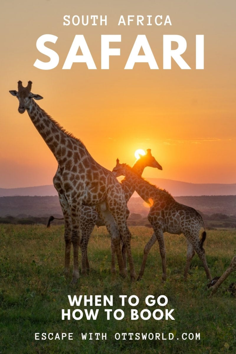 South Africa Safari - When to go and how to book
