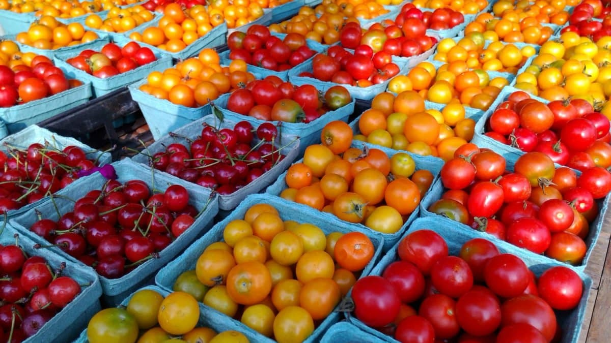 tomatoes noom snacks