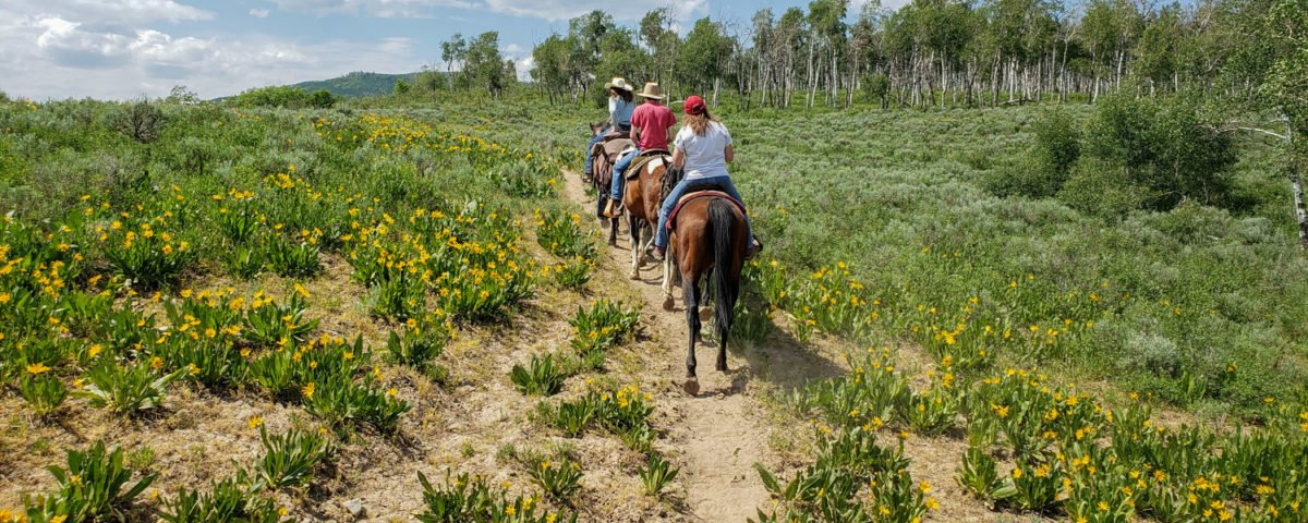 Dels Triangle 3 Ranch horse rides