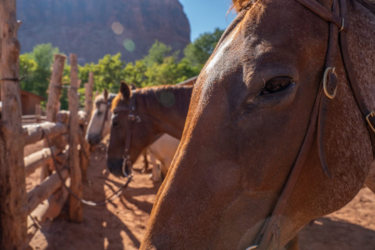 red cliffs lodge moab horse rides