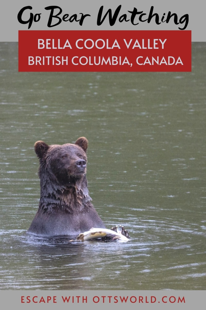 Bear Watching in the Bella Coola Valley, British Columbia, Canada
